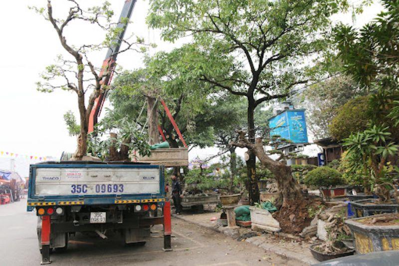 Với hạ tầng phương tiện tốt, chúng tôi có thể vận chuyển mọi loại cây cảnh