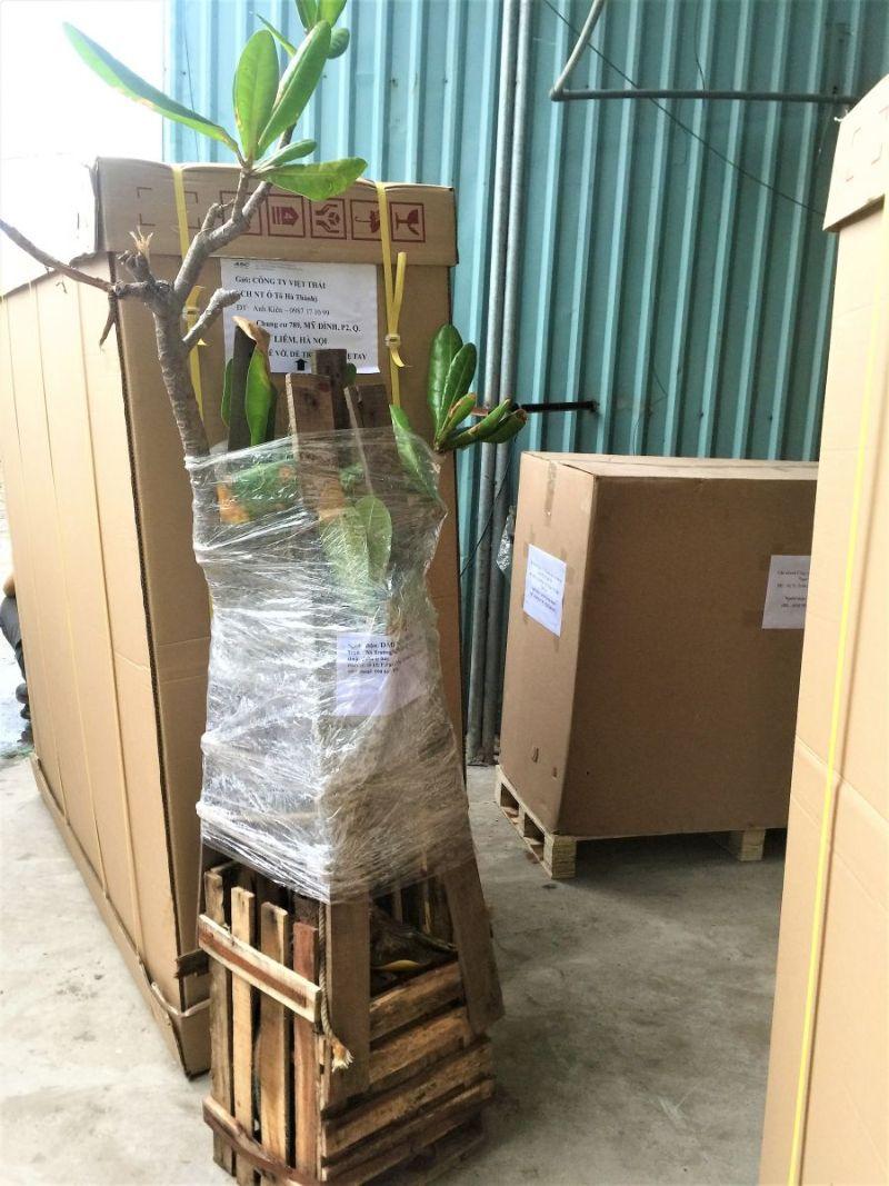 Liên hệ với Thái Hùng ngay để được hỗ trợ vận chuyển cây cảnh nhé